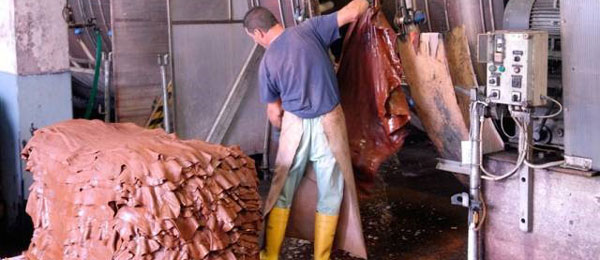 (1/6) A tannery in Italian Conceria Tempesti - Vegetable Tanning
